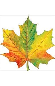Листочки Осень.Клен разноцветный (мал) на скотче  88.385